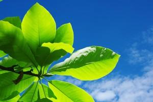 Environmental_Solutions_Goldeco_Profile